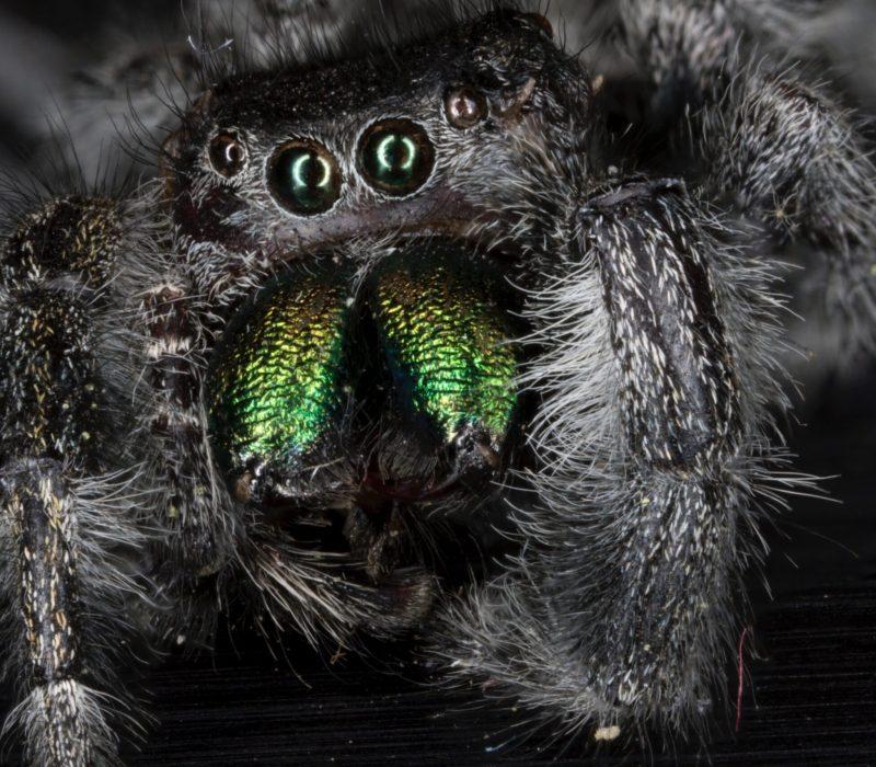 Spider-Close-Up-2